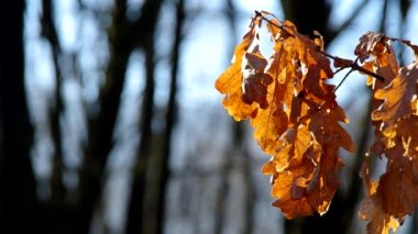 Tree leaves in the winter — Stockvideo