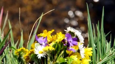 Mix of spring flowers — Stockvideo