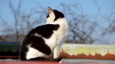 Cat on a flat roof — Vidéo