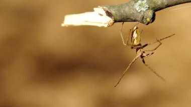 Spider on a branch — Stock Video