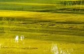 Marsh — Foto de Stock
