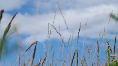 Grass and blue sky — Stock Video