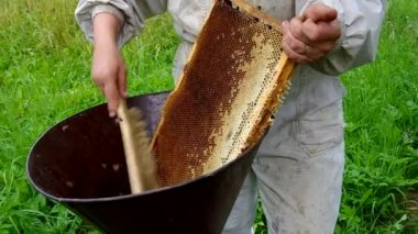 Sweeping bees from the beehive — Stock Video