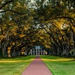 Stock Photo: Oak Alley Plantation