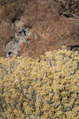 Fall Rabbit Brush over Stone — Stock Photo