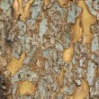Stock Photo: Patchy tree bark - vertical