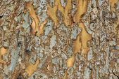 Patchy tree bark - Horizontal — Stock Photo