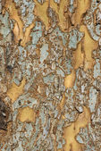 Patchy tree bark - vertical — Stock Photo
