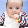 Messy 6 month old boy eats rusk — Stock Photo