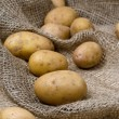 Raw potatoes — Stock Photo #27499101