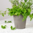 Stock Photo: Fresh green flavour, parsley, thyme, rosemary