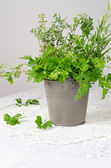 Fresh green flavour, parsley, thyme, rosemary — Stock Photo