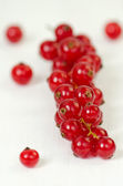 Red currant, close up — Stock Photo