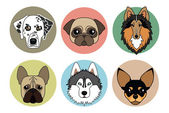 Vector icons of different breeds of dogs — Stock Vector