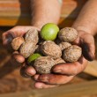 Stock Photo: Walnuts on hands, handful of walnuts
