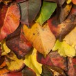 Fall. Autumn Background. Colorful background of fallen autumn leaves — Stock fotografie