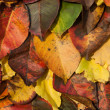 Fall. Autumn Background. Colorful background of fallen autumn leaves — Stok fotoğraf