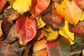 Fall. Autumn Background. Colorful background of fallen autumn leaves — Stock Photo