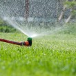 Stock Photo: Lawn sprinkler spraying water over green grass