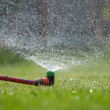 Lawn sprinkler spraying water over green grass — Stock Photo #24913475