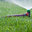 Lawn sprinkler spraying water over green grass — Stock Photo #24913495