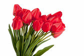 Beautiful bouquet of red tulips, isolated on white — Zdjęcie stockowe