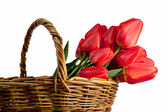 Beautiful bouquet of red tulips in a basket, isolated on white — Stok fotoğraf