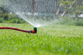 Lawn sprinkler spraying water over green grass — Foto de Stock