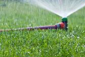 Lawn sprinkler spraying water over green grass — Stock Photo