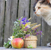 Flowers and cat in the background — Stock Photo