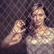 Stock Photo: Wombehind wired fence