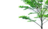 Tree with bird — Stock Photo