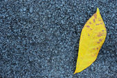 Asphalt texture with yellow leaf — Stock Photo