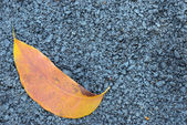 Asphalt texture with brown leaf — Stock Photo