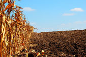 Soil is ready — Photo