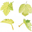 Grape Leafs - Stock Vector