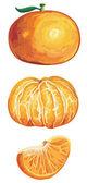 Fresh tangerine set — Stock Vector