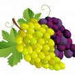 White grape — Stock Vector