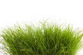 Green grass — Stockfoto
