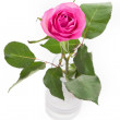 Pink rose in vase with leaves isolated on white — Stock Photo #21076831