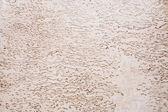 Texture of karelian birch — Stock Photo