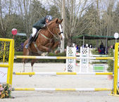 Horse jumping — Stok fotoğraf
