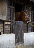 Horse snort — Stock Photo