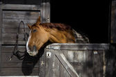 Horse on stable — Stock Photo
