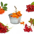 Set of fresh autumnal berries ( ash berry and viburnum) isolated — Stock Photo #19603365