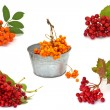 Stock Photo: Set of fresh autumnal berries ( ash berry and viburnum) isolated