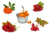Set of fresh autumnal berries ( ash berry and viburnum) isolated — Stock Photo
