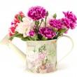 Stock Photo: Fresh carnations in watering can