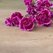 Fresh carnations — Stock Photo