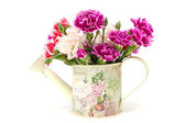 Fresh carnations in watering can — Stock Photo